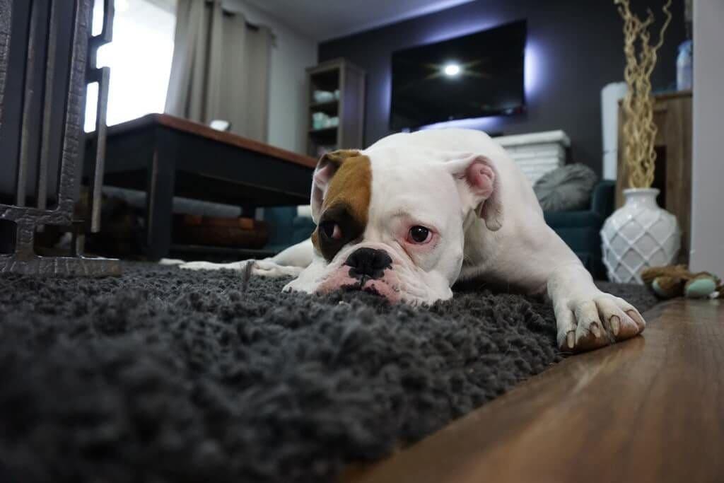 lęk separacyjny u psa zrozumiecpupila